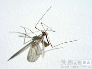 北京市新增2例输入性黄热病病例